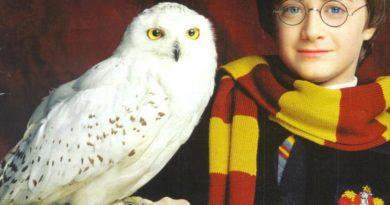 Животные-актёры: Кто играл домашних любимцев в фильмах про Гарри Поттера