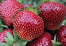 Как научиться выращивать цветы и ягоды на своем участке?